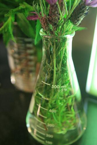Flowers in a beaker