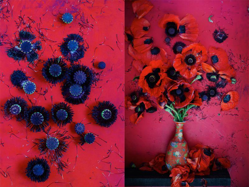 2012_5.summerflower-5+6
